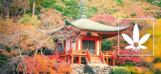 Chanvre D'Hokkaido : Une Variété Naturelle Japonaise Rare