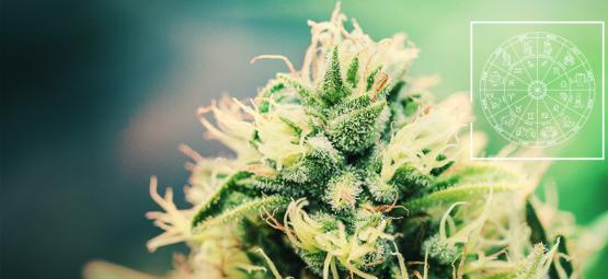 La Variété De Cannabis Parfaite Pour Chaque Signe Astrologique