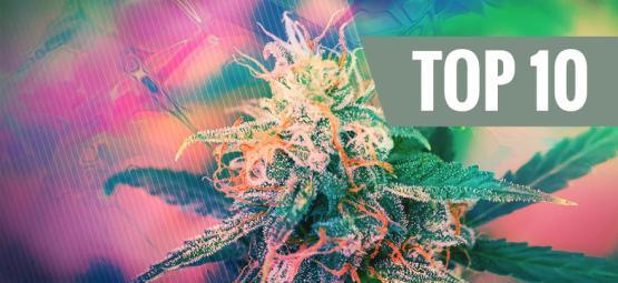 Le Top 10 Des Variétés De Cannabis Psychédéliques