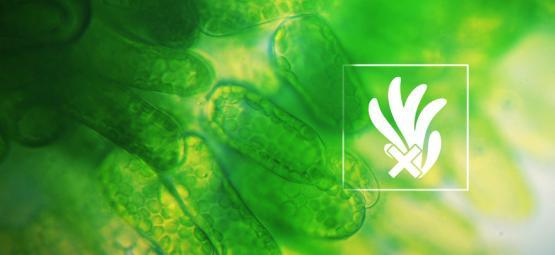 Éliminer Et Prévenir Les Algues Dans La Culture Hydroponique Du Cannabis