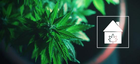 Comment Cultiver Du Cannabis N'Importe Où Chez Vous