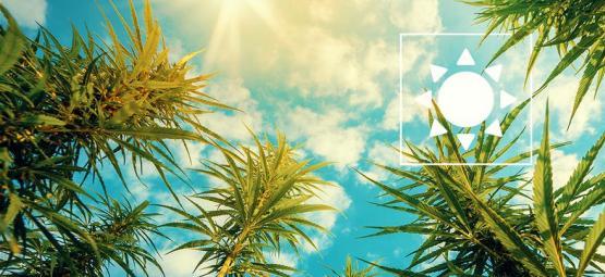 Quelle Quantité De Lumière Le Cannabis En Extérieur A-Il Besoin ?