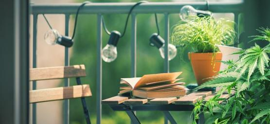 Top 10 Des Variétés De Cannabis À Cultiver Sur Un Balcon Ou Une Terrasse