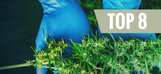 8 Outils De Récolte Indispensables Au Cultivateur De Cannabis