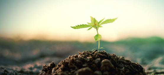 Comment Faire Son Propre Compost Pour La Culture Du Cannabis