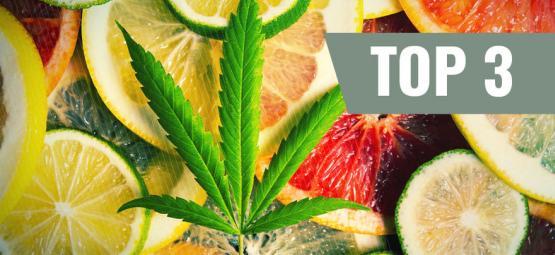 Top 3 Des Variétés De Cannabis Par Terpènes