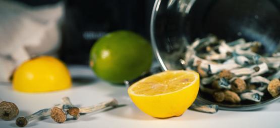 Le Lemon Tek Pour Un Voyages Sous Champignons o Truffes Magiques Plus Rapide