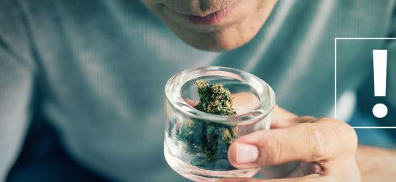 Comment Reconnaître Les Contaminations Des Têtes De Cannabis