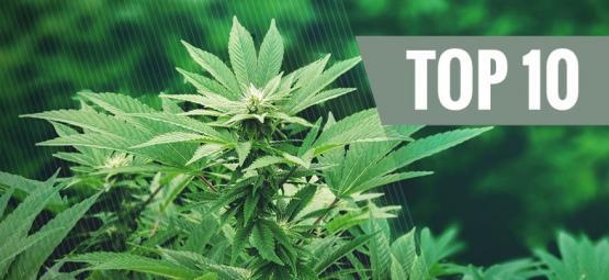Le top 10 des utilisations du chanvre : une plante révolutionnaire   Partie 1