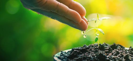 Thé De Compost : Aide Naturelle Pour Vos Plants De Cannabis