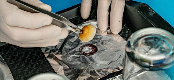 Comment Prendre Des Empreintes De Spore Propres