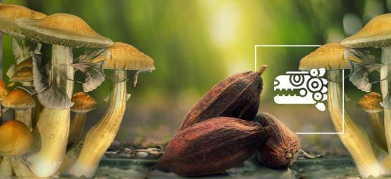 La combo aztèque : champignons et cacao