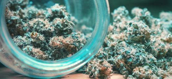 Comment Réaliser Un Séchage Et Un Curing Correct Des Têtes De Cannabis