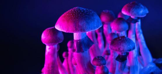 Les champignons magiques et le cerveau hyper-connecté