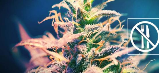 Des Variétés De Cannabis Ne Donnant Pas De Fringale ?
