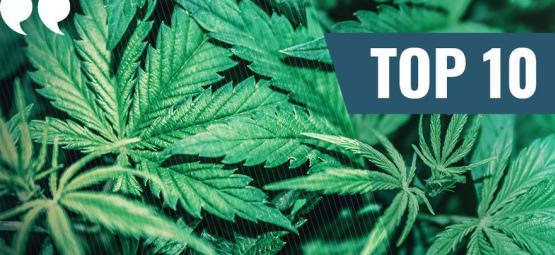 Nos 10 meilleurs citations sur le cannabis de tous les temps