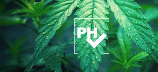 Comment Ajuster Le Niveau Du pH Dans Une Culture De Cannabis