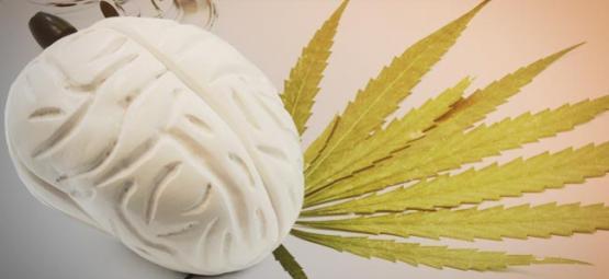 Ce Que Le Cannabis Fait À Votre Cerveau