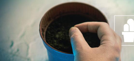 Cultiver des cactus à partir de graines et de boutures