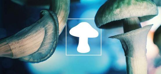 Le champignon : notre ami extraterrestre venu de l'espace ?