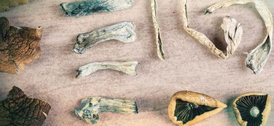 Combien de types de champis magiques existe-t-il ?