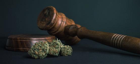 10 Raisons Pour Lesquelles TOUTES Les Drogues Devraient Être Légalisées