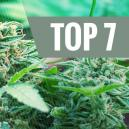 7 Causes Courantes de Stress Chez Vos Plants de Cannabis