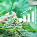 5 Façons D'augmenter Les Rendements Du Cannabis