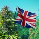 Graines de Cannabis au R-U: Weed Pour Climat Britannique