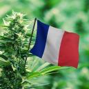 Meilleures Variétés de Cannabis d'Extérieur En France