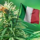 Bonnes Variétés De Cannabis Extérieur 2017 À Cultiver En Italie
