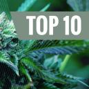 Les 10 meilleures variétés de Cannabis Médical