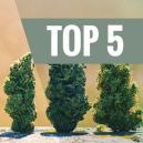 Top Cinq Des Variétés Autofleurissantes À Haut Rendement