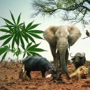 Partez Pour Un Safari Grâce À 5 Variétés Semblables Aux Big Five