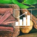 Comment Cultiver La Banisteriopsis Caapi À Partir D'Une Graine