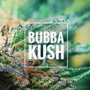 Critique de variété - Bubba Kush