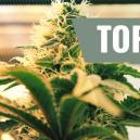 Top 7 des critères d'éclairage pour la culture du cannabis