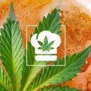 Comment faire de la bière au cannabis