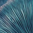 Voyages sous champignons magiques : Conseils aux débutants
