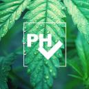 Conseil de culture : l'importance du pH