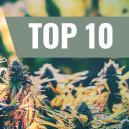 Nos 10 Meilleures Variétés Féminisées D'Extérieur