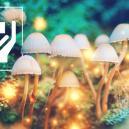 5 Bienfaits Surprenants des Champignons Magiques
