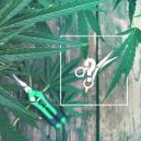 Conseil de Culture : Comment Tailler Les Plants De Cannabis