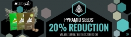Offre Pyramid Seeds