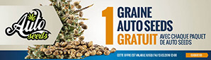 Offre Auto Seeds