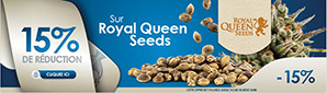 20% De Réduction sur TOUS les Royal Queen Seeds