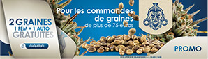 Offre Graines Cannabis