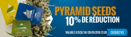 10% Réduction Pyramid Seeds