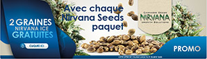 Offre Nirvana Seeds